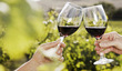 Long Island, NY: 'First-Class' Wine Country Tour