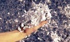 American Shredding Coupons Wilmington, California Deals