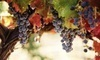 Day-Trip Excursion to Michigan Wine Country Coupons Chicago, Illinois Deals