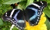 Newport Butterfly Farm Coupons Tiverton, Rhode Island Deals