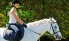 Manito Equestrian Center Coupons Allentown, Pennsylvania Deals