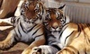 Forever Wild Exotic Animal Sanctuary Coupons Phelan, California Deals