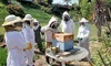 Hands-On Beekeeping Class Coupons National City, California Deals