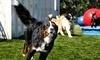 Broadway Animal Hospital and Pet Center Coupons Boulder, Colorado Deals