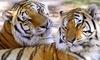 Wildlife Survival Sanctuary Coupons Spring Hill, Florida Deals