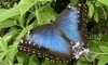 Cambridge Butterfly Conservatory Coupons