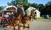 Chisholm Trail Museum Coupons