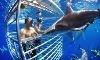 Hawaii Shark Encounters Coupons