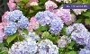 English Gardens Coupons