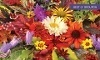 Romence Gardens & Greenhouse Coupons