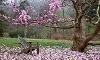 Tyler Arboretum Coupons