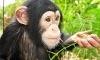 Suncoast Primate Sanctuary Coupons