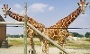 African Safari Wildlife Park Coupons