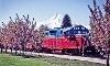 Mount Hood Railroad Coupons
