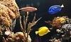 Coral Sea Aquarium Coupons