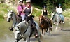 Cypress Trails Equestrian Center Coupons