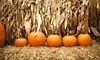 Pumpkinville Corn Maze Coupons