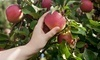 Dodd's Hillcrest Orchard Coupons