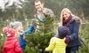 Mr. Jingles Christmas Trees Coupons