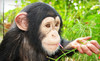 Suncoast Primate Sanctuary Coupons Palm Harbor, Florida Deals