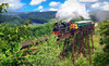 Boone & Scenic Valley Railroad & Museum Coupons Boone, Iowa Deals