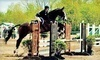 Essex Equestrian Center Coupons West Orange, New Jersey Deals